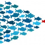 bigstock-Fishes-in-group-leadership-con